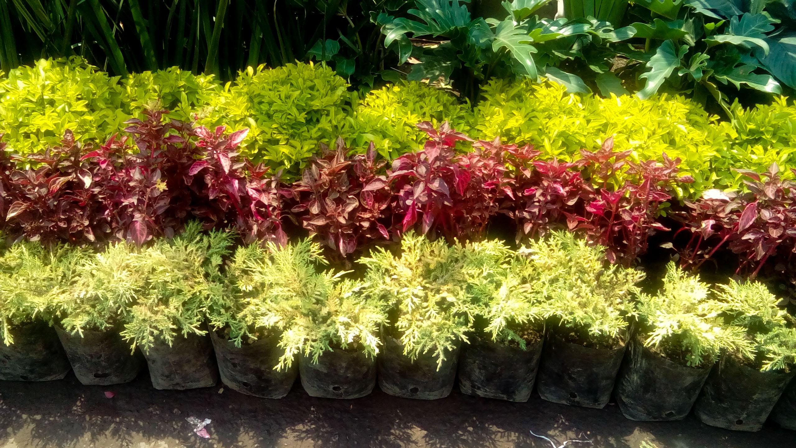 Galeria for Arreglos de jardines con macetas